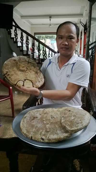 Hải Dương, nấm linh chi, thảo dược, Ninh Giang, phát hiện,