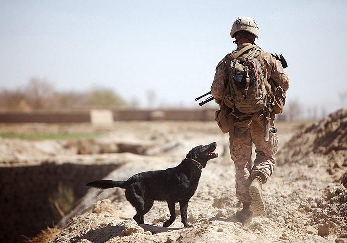Giải ba là bức ảnh quân nhân Mỹ và chú chó nghiệp vụ của mình trên đường tuần tra