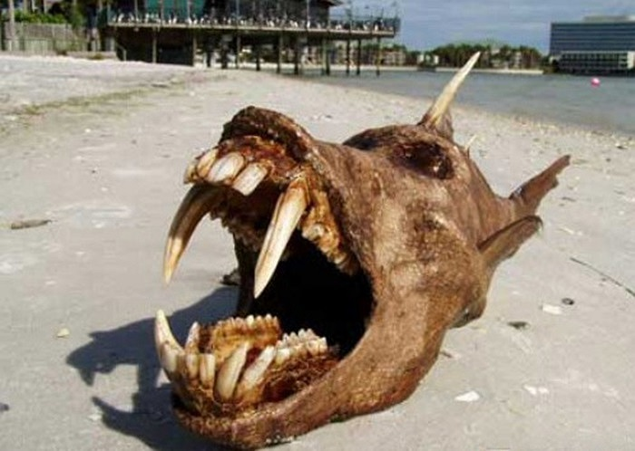 Cá địa ngục khá là xương xẩu với một lớp vảy màu nâu, trên lưng có một vật màu trắng nhọn hoắt,giống một cái sừng