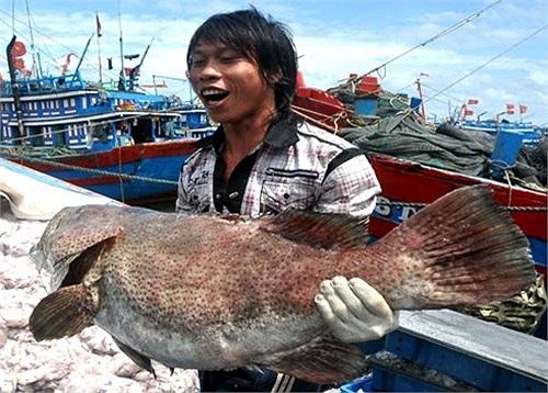 Ngư dân trẻ vào vai lực sĩ nhấc bổng con cá mú nặng hơn 40 kg đưa lên từ khoang tàu.