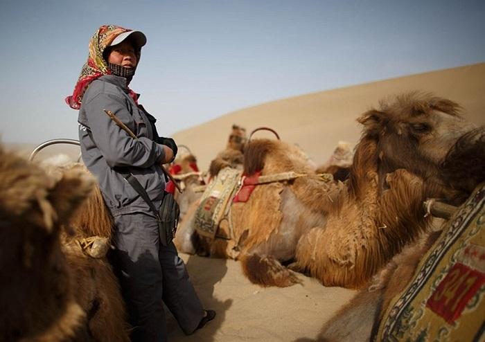 Người dân địa phương cho đàn lạc đà nghỉ ngơi trong khi chờ khách du lịch