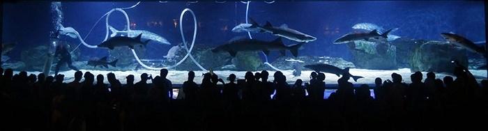 Khách du lịch đứng xem cá mập trong Thủy cung Bắc Kinh ở Bắc Kinh, Trung Quốc
