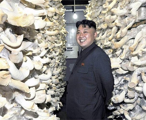 Nhà lãnh đạo Kim Jong-Un mỉm cười trong một nhà máy sản xuất nấm ở Triều Tiên