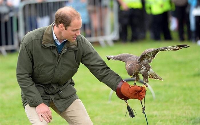 Hoàng tử William, Công tước xứ Cambridge tham gia cuộc trình diễn chim ưng tại Anglesey Showground, Anh