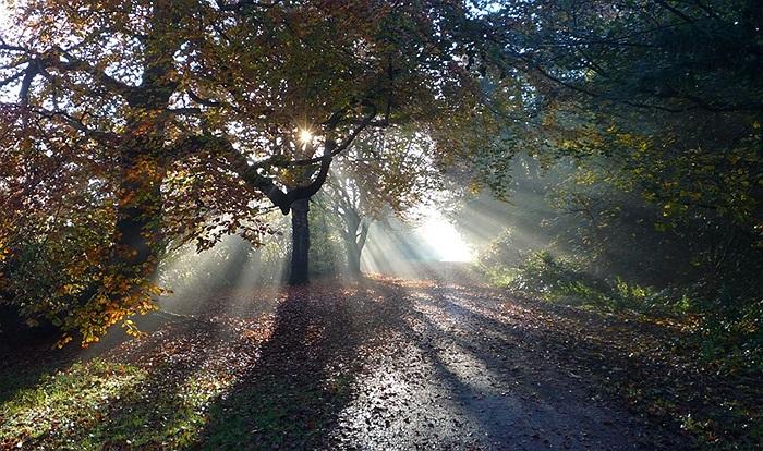 Ánh nắng xuyên qua tán cây tạo nên một hình ảnh tuyệt vời