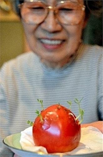 Cà chua mọc mầm