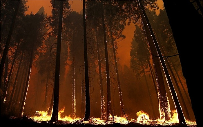 Lửa cháy ngoài tầm kiểm soát dọc theo Cao tốc 120 ở Buck Meadows, California, Mỹ