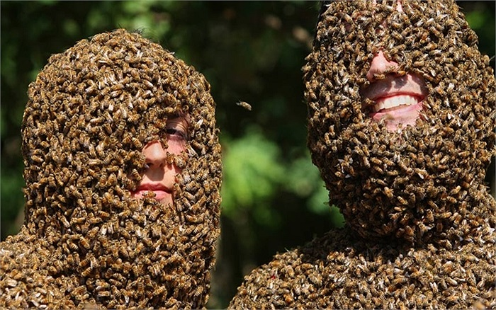Hai đấu thủ cạnh tranh về số lượng ong bám trên mặt trong một cuộc thi ở trang trại Clovermead Adventure ở Aylmer, Ontario, Canada