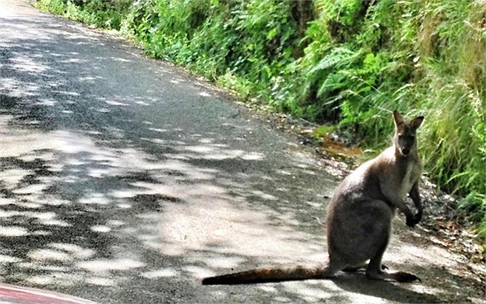 Chú chuột túi được phát hiện ở Slaithwaite, gần Holmfirth, Tây Yorkshire, Anh