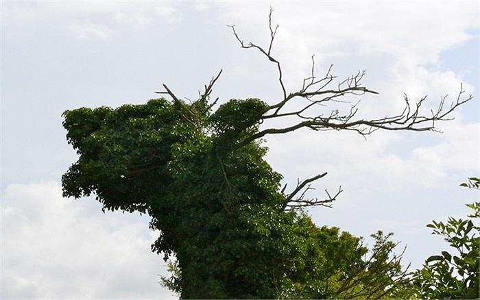Cây xanh nhìn giống một chú hươu trên đồi White Horse, Wiltshire, Anh