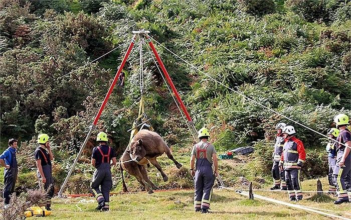 16 nhân viên cứu hộ giải cứu một con bò bị trượt xuống mỏ Gomanena trên đồi Caradon, Cornwall, Anh