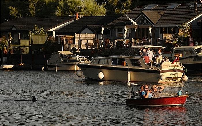 Hai người đi thuyền nhanh chóng quay lại bở sau khi thấy con cá mập đi theo họ ở Sunbury, tây London, Anh