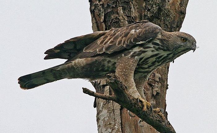 Ở Việt Nam, chúng là loài cấm săn bắt