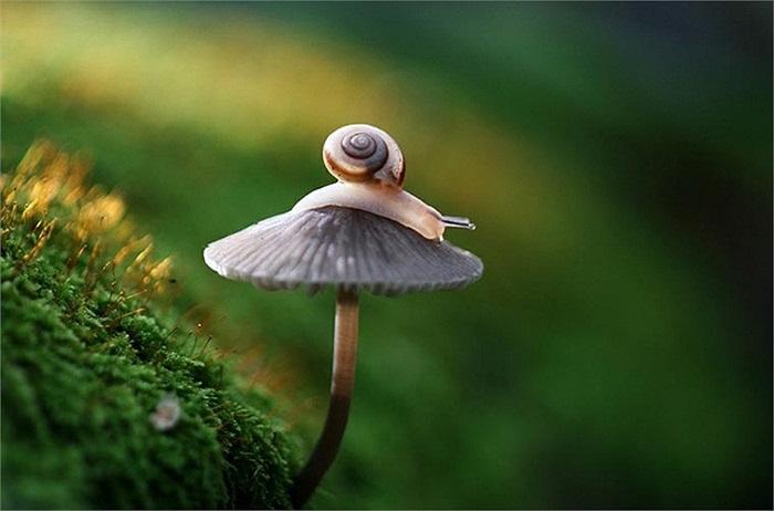 Chú sên nghịch ngợm đang trèo lên 'nóc' một cây nấm.
