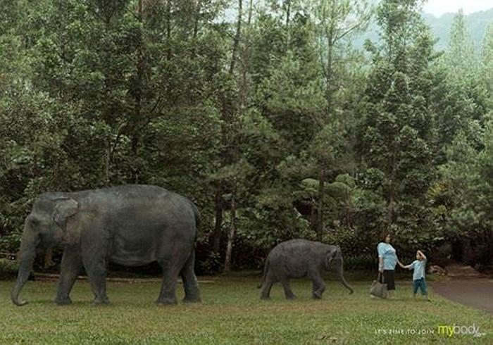 Khi bạn che khuất cả con voi khỏi tầm mắt của trẻ, đó là lúc bạn nên đến phòng tập thể hình - Quảng cáo của phòng Gym Mybody tại Indonesia.