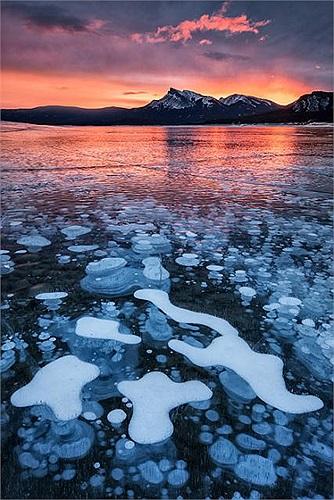 Khi mùa xuân đến và hồ Abraham bắt đầu tan băng, Những bong bóng này được giải phóng và trôi lên mặt hồ.