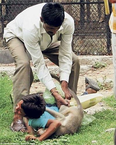 Các bức ảnh do một khách tham quan chụp lại, mô tả cảnh cậu bé bị con khỉ báu chặt và cắn vào người, máu trên mặt và tay nạn nhân chảy ra khá nhiều.