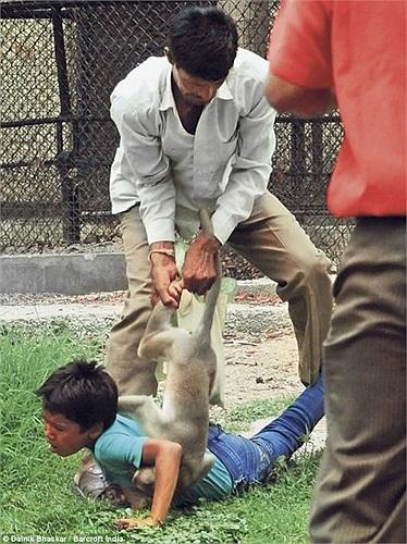Sau đó, một nhân viên sở thú cùng cha của nạn nhân đã lao vào giải cứu cho cậu bé, họ dùng một cây gỗ dài để tách con khỉ hung dữ ra khỏi Raghav.