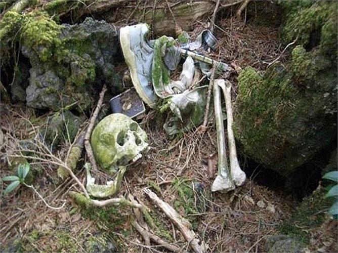 Rừng Aokigahara (Nhật Bản), là khu rừng có thảm thực vật đặc biệt, mọc ken dày. Khu rừng này nổi tiếng là nơi có nhiều vụ tự sát. Do đó, nó có tên là Rừng Tự Sát.