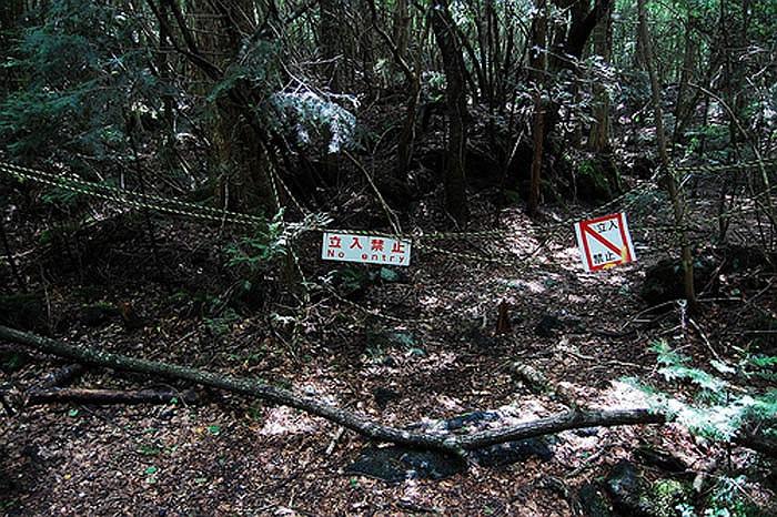 Khu Rừng Tự Sát nằm ngay dưới chân đỉnh núi Phú Sỹ kỳ vĩ.