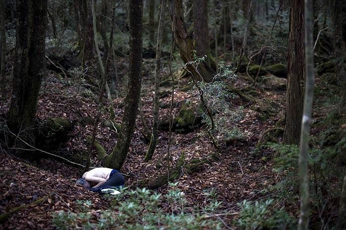 """Cuốn Sổ Tay Tự Tử Toàn ngoài việc hướng dẫn các phương thức tự tử, còn tạo ra hiệu ứng mạnh mẽ khi đề cử Aokigahara là nơi """"hoàn hảo để chết""""."""