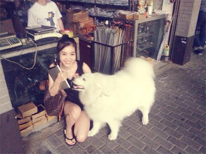 Tình yêu với các chú cún của Elly còn mạnh đến mức, trong những chuyến công tác nước ngoài, cô luôn không thể dừng mắt khỏi những chú cún xinh đẹp.