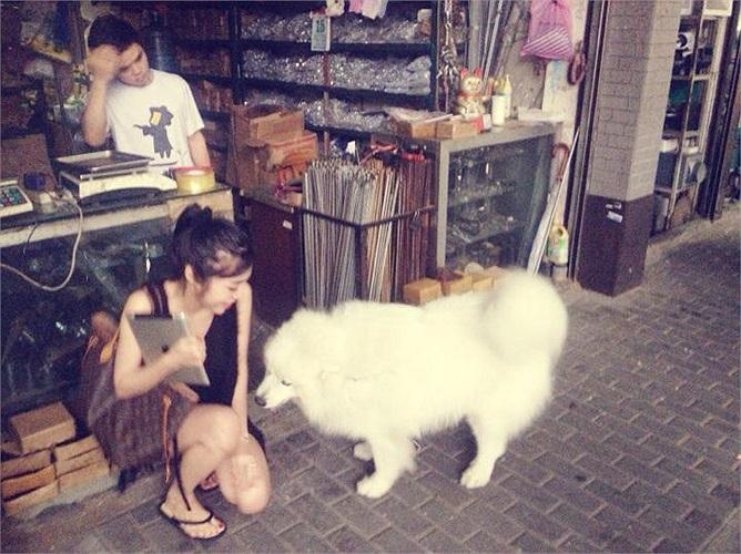 Dường như, được chơi đùa cùng những chú cún là khoảnh khắc hiếm hoi Elly Trần quên đi mình là ai.