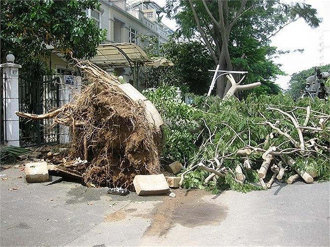 Mưa lớn quật ngã hàng trăm cây xanh ở khu đô thị Phú Mỹ Hưng. Rất may không có thương tích về người. Ảnh: Phạm Nguyễn