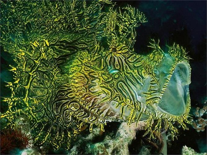 Cá chép biển: Việc có màu sắc giống với san hô không chỉ giúp loài cá này lẩn trốn kẻ thù mà qua đó cũng giúp nó dễ dàng ẩn nấp để săn mồi.