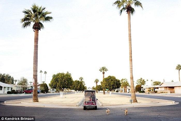 Một cụ ông thảnh thơi lái xe dẫn chó cưng đi dạo.