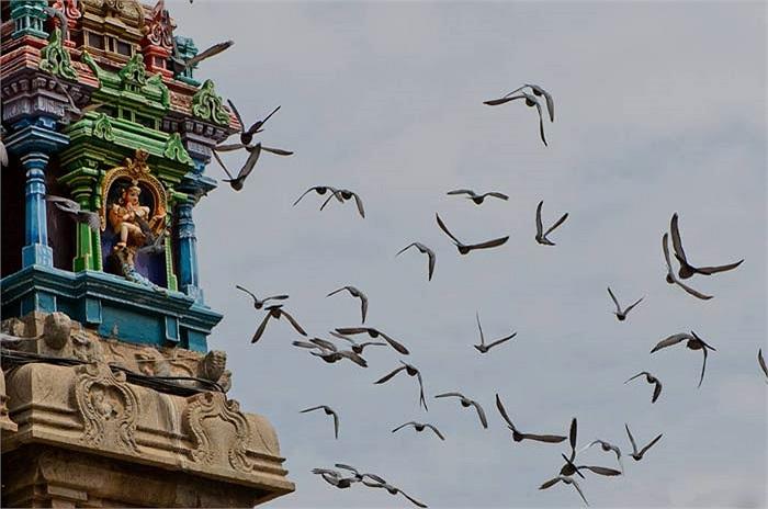 Meenakshi xứng đáng là một trong những ngôi đền Ấn Độ giáo đẹp nhất trên thế giới.