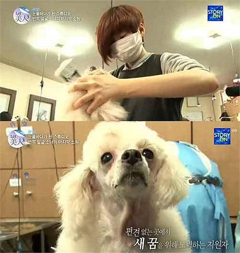 Vì khuôn mặt bị biến dạng nên cuộc sống của cô vô cùng khó khăn, cô buộc phải để tóc che đi phần mặt bị hỏng và chỉ có mỗi chú cún làm bạn với mình.