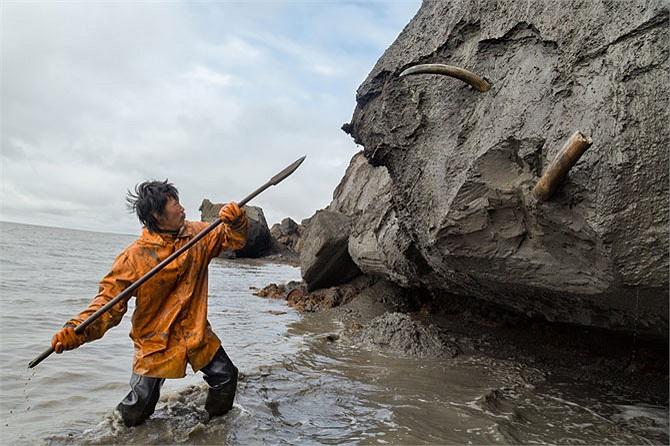 Một thợ săn ngà voi khác đang sử dụng cây giáo để đào một chiếc ngà voi từ vách đá ven bờ biển. Công việc này có thể mất nhiều tiếng đồng hồ hay thậm chí là cả ngày.