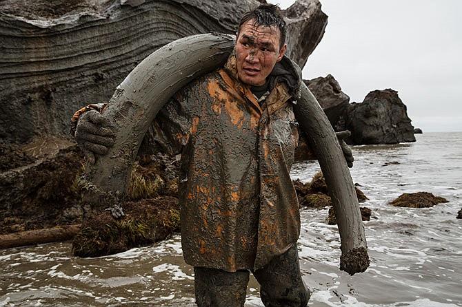 Cũng là Milyutin lấm lem cùng với một chiếc ngà voi khác trên bờ biển. Giữa thời tiết lạnh giá và ẩm ướt, những người thợ săn có thể phải trải qua hàng tuần liền không giặt giũ hay hong khô quần áo.