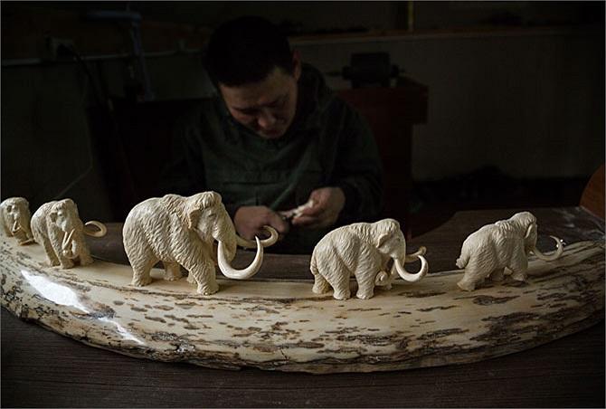 Một thợ điêu khắc tại khu vực thủ phủ tỉnh Yakutsk đang biến một chiếc ngà voi ma-mút thành cuộc diễu hành của đàn voi thu nhỏ. Những sản phẩm này sẽ được bán tại Nga, nhưng nhu cầu từ Trung Quốc cũng đang ngày một gia tăng.