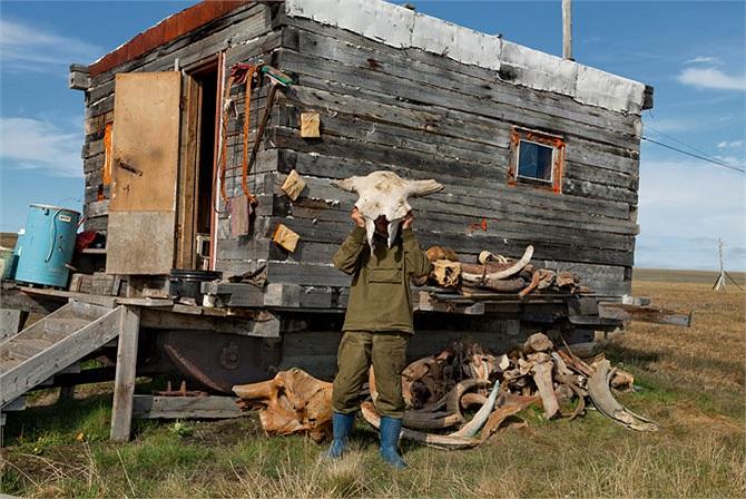 Bên ngoài một phòng tắm dã chiến gần hồ Bustakh, thợ săn ngà voi Vladimir Potapov đang nâng cao hộp sọ của một con bò rừng thời tiền sử mà họ tìm thấy cùng với rất nhiều các loại xương động vật khác, trong đó có cả ngà voi ma-mút.
