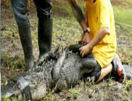 nam sinh chiến đấu với cá sấu cứu người