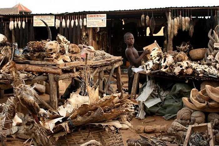 Tại đất nước Togo ở Tây Phi có một khu chợ rất kỳ lạ và cũng không kém phần rùng rợn được gọi là Chợ bùa chú Akodessewa.