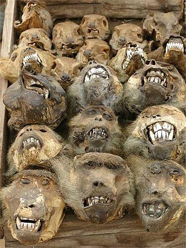 Khỉ đầu chó là loài vật tương đối phổ biến và dễ săn bắt nên xuất hiện khá nhiều tại khu chợ.