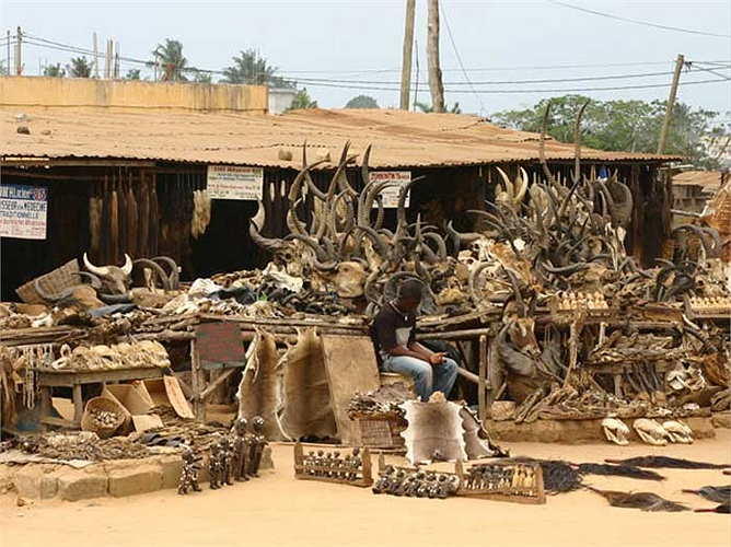 Những cái đầu, hộp sọ của linh dương, trâu rừng… vẫn còn nguyên cả cặp sừng hùng dũng.