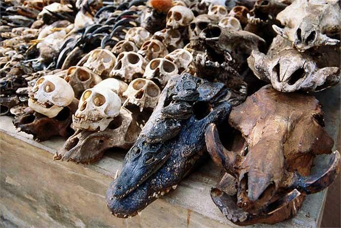 Trong đó hầu hết là các bộ phận cơ thể của các loài động vật hoang dã như là hộp sọ…