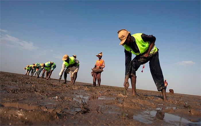 300 người đã tham gia trồng 750.000 cây đước trong vòng 1 ngày tại 1 khu vực ở Pakistan. Qua đó thiết lập kỷ lục Guinness về số cây đước được trồng nhiều nhất trong 1 ngày.