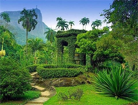 Vườn bách thảo Jardim Botnico, ở Rio de Janeiro, Brazil. Tại đây, khách du lịch sẽ được chiêm ngưỡng cảnh sắc thiên nhiên tuyệt đẹp với khoảng 6.500 loài thực vật, trong đó một số loài quý hiếm có nguy cơ tuyệt chủng. Khu vườn này thành lập năm 1808.