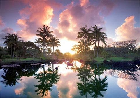 Vườn sinh thái Na Aina Kai Botanical, Hawaii. Khu vườn này được xem là 'thiên đường thực vật' với nhiều loài sinh vật quý hiếm.