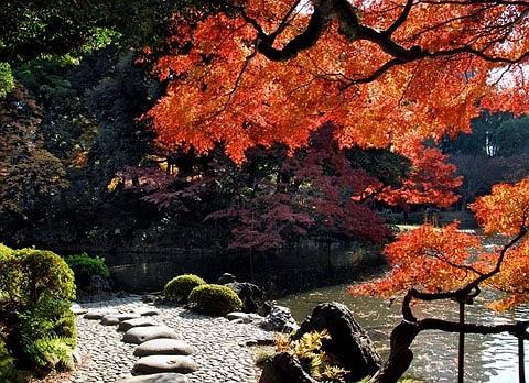 Vườn Koishikawa Korakuen, Nhật Bản. Phong cảnh cổ kính nơi đây thu hút nhiều du khách tới tham quan hàng năm.