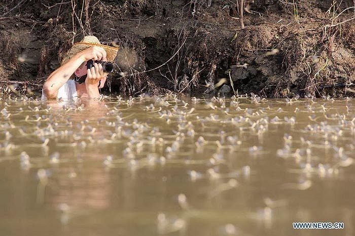 Có những du khách không ngại ngần bị ướt hay bùn bẩn để có được những tấm hình đẹp về sự tuyệt đẹp của loài phù du đuôi dài này.