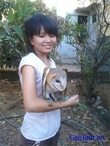 Có nhiều loại cú mèo khác nhau xuất hiện trên thị trường ở Việt Nam, phổ biến nhất là cú lợn (trong ảnh), cú mèo khoang cổ, cú mèo lưng xám