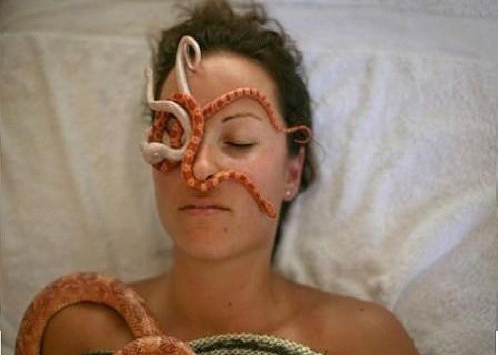 Mát xa bằng rắn