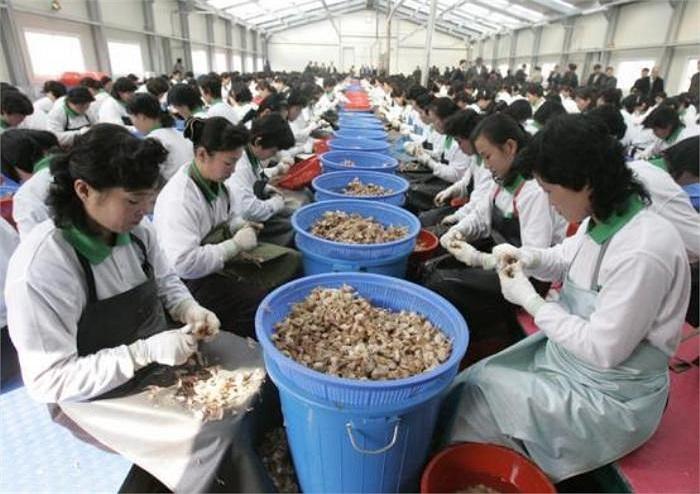 Công nhân Triều Tiên làm việc tại một nhà máy chế biến tỏi do một công ty Hàn Quốc đầu tư tại khu công nghiệp chung Kaesong nằm trên lãnh thổ Triều Tiền (Ảnh chụp năm 2007)