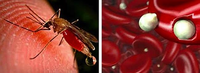 9. Bệnh sốt rét: Sốt rét được gây ra bởi ký sinh trùng được truyền từ người đến người thông qua vết cắn của con muỗi bị nhiễm bệnh.Ước tính có khoảng 300 - 500 triệu trường hợp mắc bệnh mỗi năm, và hơn một triệu người chết mỗi năm do bệnh này.